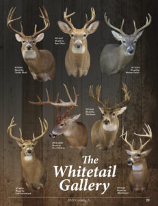 WHITETAIL GALLERY