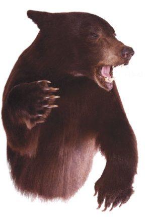 Black Bear mount, L-144-4J