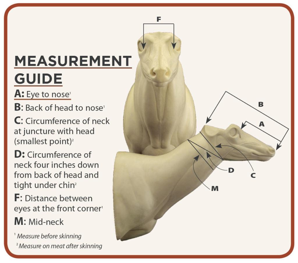 measurement-chart