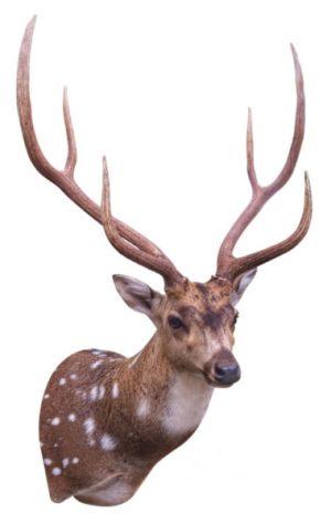 jet smith axis deer