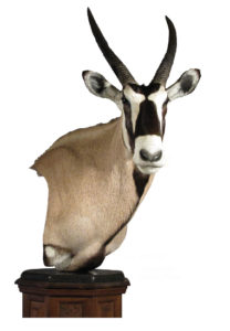 Gemsbok mount by Jerry Huffaker, AG-GE162P, Pedestal