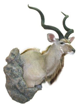 Greater Kudu, G-1682-66WP, Mount by Tracy Jacobsen, Upright, Wall Pedestal