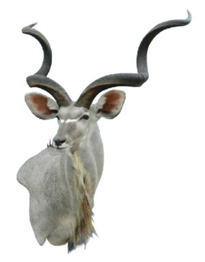 Kudu, G-KUDU303, Mount by Jet Smith, Wall Pedestal