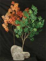 oak branches
