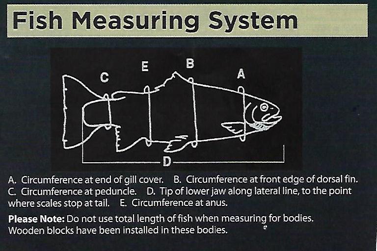 fish measuring chart