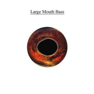 LARGEMOUTH BASS EYES