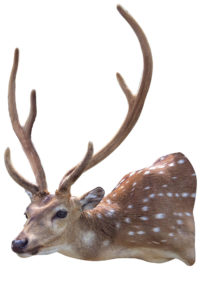 JET SMITH AXIS DEER